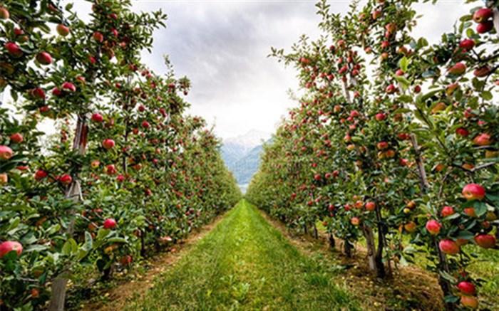 تعبیر خواب باغ سیب